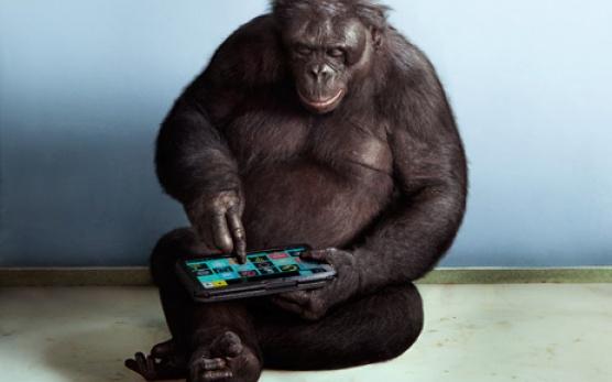 Rezultat slika za majmun